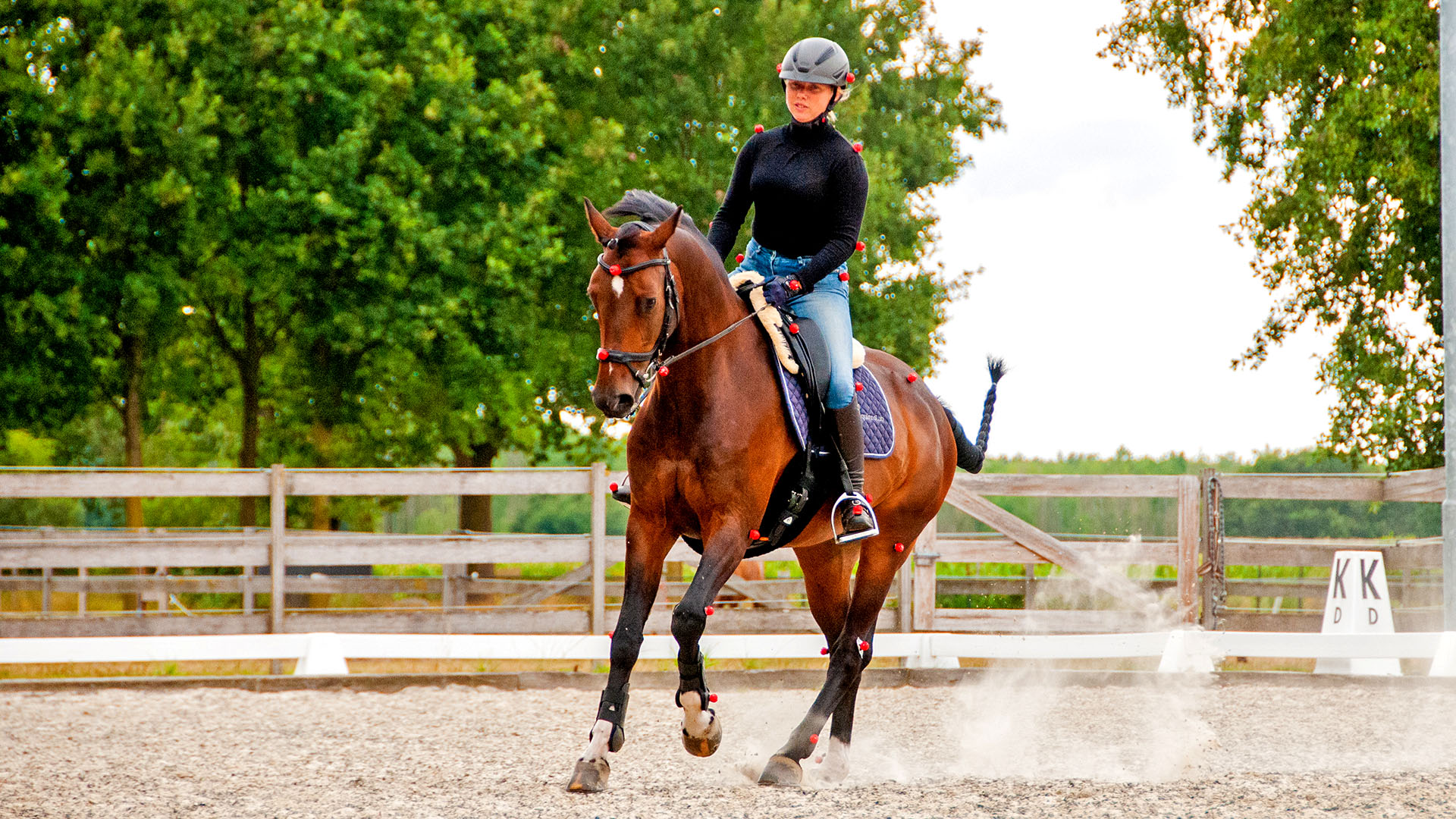 What effect do you as a rider have on the symmetrical movements of your horse?
