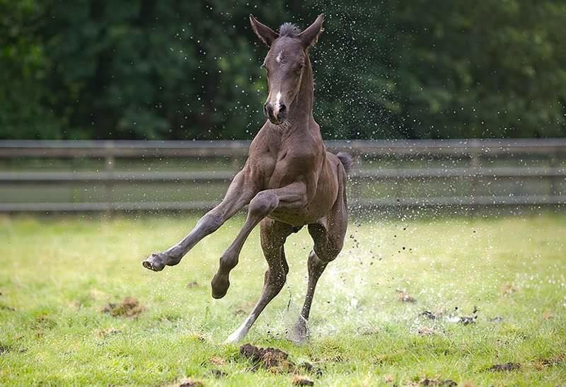 Physical exercise during the rearing phase of your horse